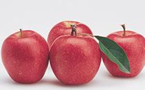 坐月子可以吃柿子吗 哺乳期吃柿子宝宝会拉肚子吗