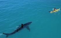 深海恐惧症最怕的图终极测试 深海恐惧症如何治疗